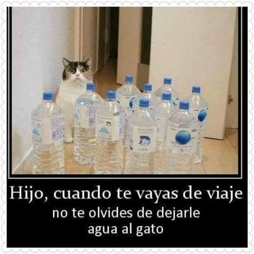 agua al gato