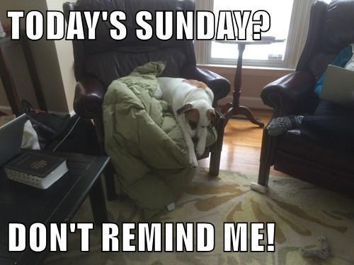 dogs,weekends,sunday