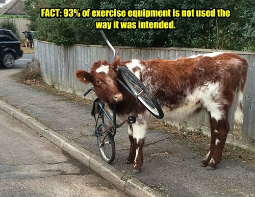 cow captions funny - 8491070720