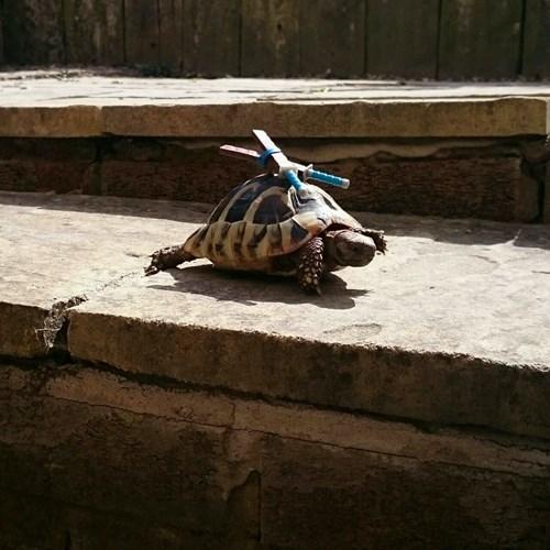 superheroes-tmnt-real-life-leonardo-leads-tortoise