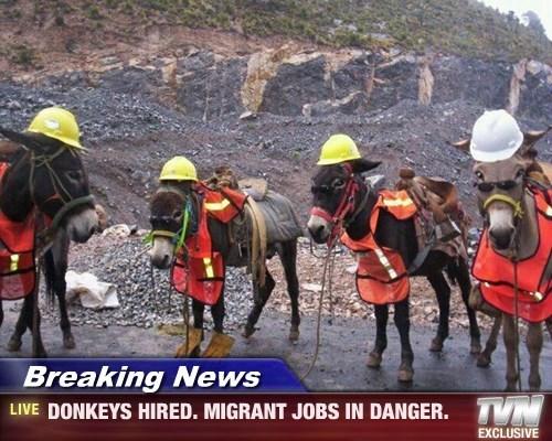 Breaking News - DONKEYS HIRED. MIGRANT JOBS IN DANGER.