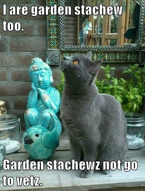 animals statue vet Cats - 8491791616
