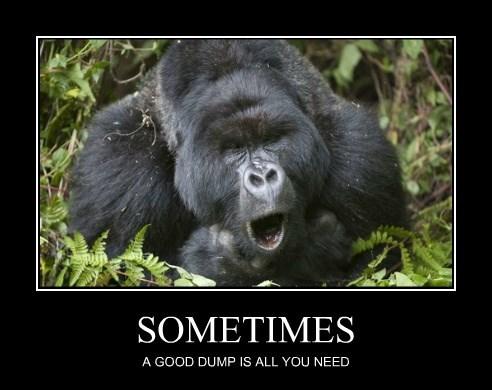 gorilla poster poop - 8491812352