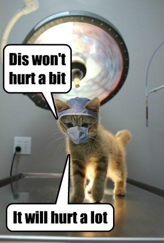 doctor kitten cute Cats - 8491820032