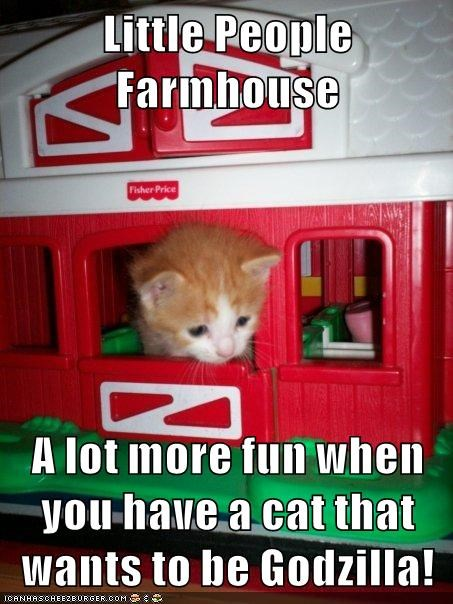 animals kitten cute Cats - 8491829504