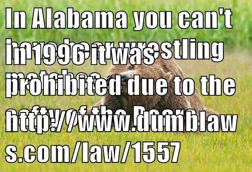 animals - 8491842560
