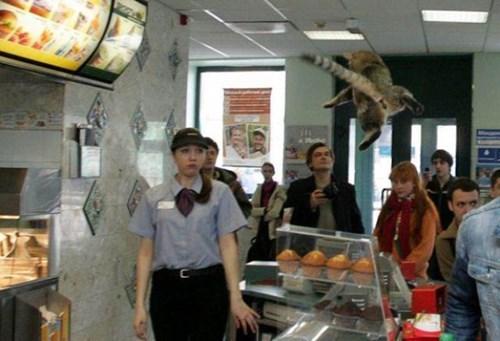 work raccoon restaurant animals - 8491945728
