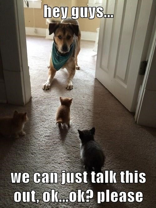 animals dogs captions funny - 8492010240