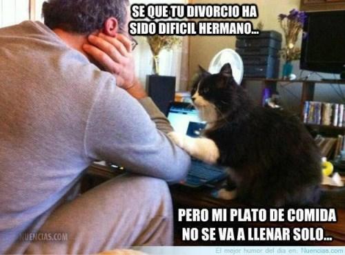 ponle cuidado al gato