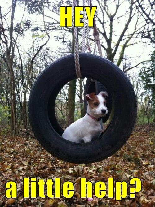 animals dogs puns tire - 8492304384