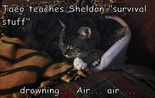 """Taeo teaches Sheldon """"survival stuff""""  drowning....Air... air...."""