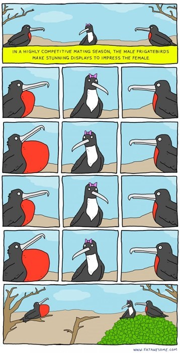 funny-web-comics-the-mating-rituals-of-birds