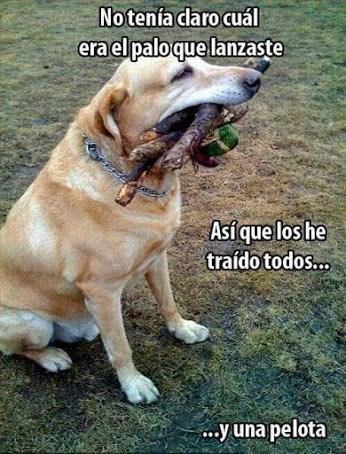 perro obediente