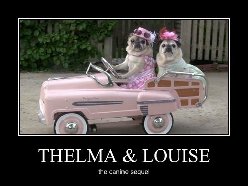 dogs,thelma and louise,poster,puns