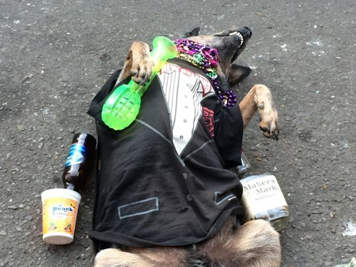 """Party dog fail - Fido Can Play """"Passed Out"""" and with some accessories, hilarious."""