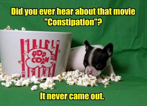 puppy movies puns cute - 8492785408