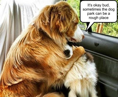 dog park dogs - 8492877568