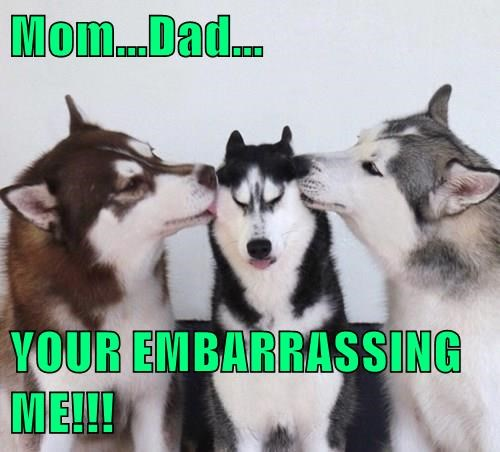 animals dogs captions funny - 8492997120