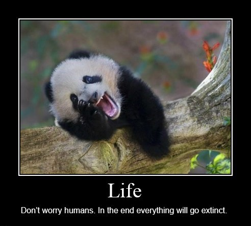 demotivational panda image Life, Uh... Finds a Way