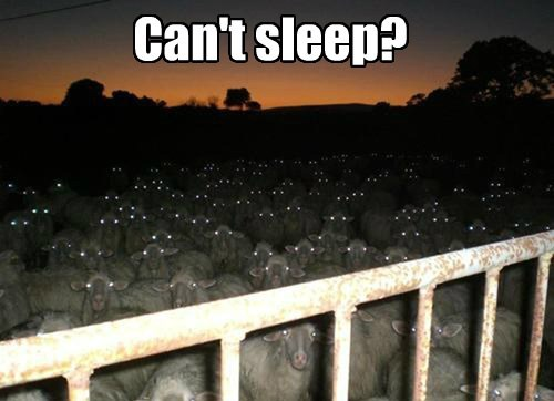 captions,sheep,funny