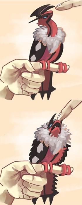 pokemon memes yveltal pet bird