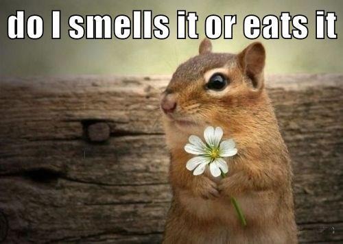 animals squirrel captions funny - 8493193216