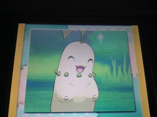 pokemon memes chikorita looks naughty