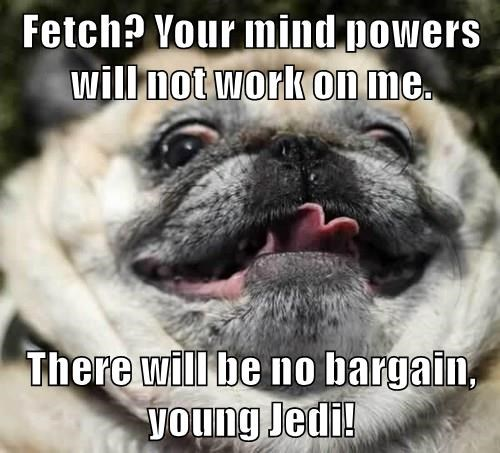 animals dogs star wars captions funny - 8493327360