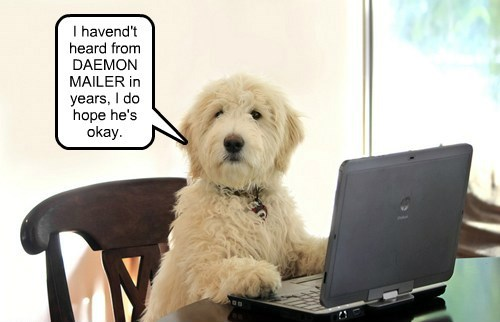 dogs,email