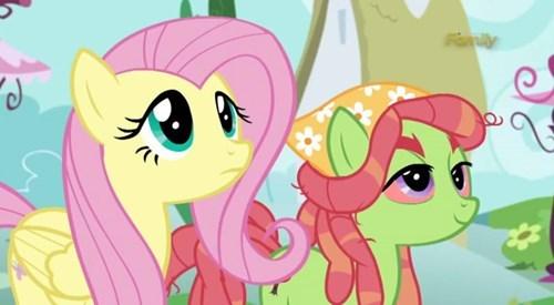 tree hugger pony fluttershy - 8493478912