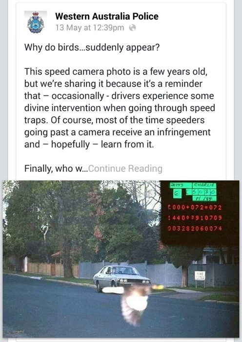 funny-facebook-pic-police-bird-speeding