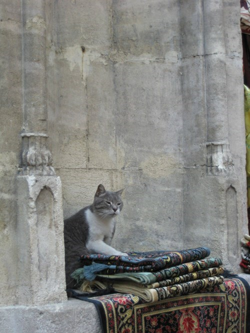 Khajiit Has Wares if You Have Coin...