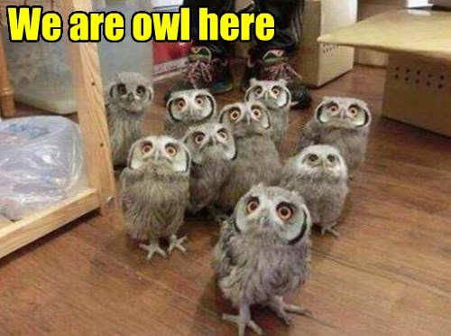 captions puns owls funny - 8493997568