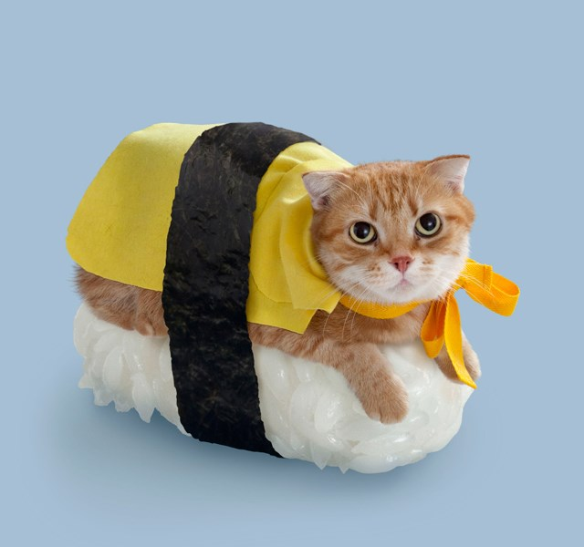 cats decorated to look like giant suchi pieces