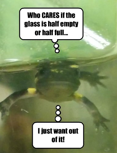 captions funny frog - 8494130176