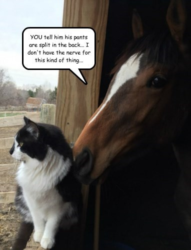 captions Cats funny horse - 8494224640