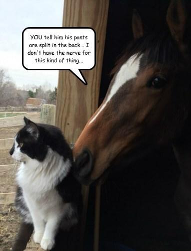captions Cats funny horse - 8494224640