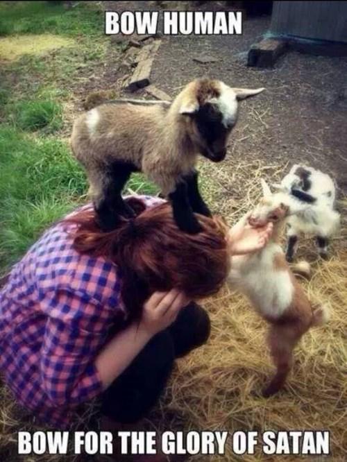 satan,goats