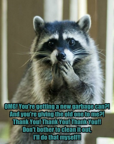 raccoon garbage gift