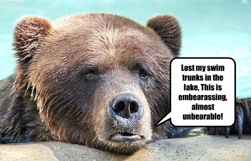 pun bear swimming