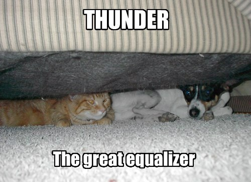 dogs thunder safety Cats - 8494975488