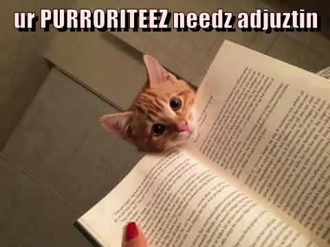 ur PURRORITEEZ needz adjuztin
