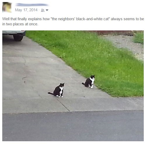 pets,mind blown,Cats,failbook,g rated