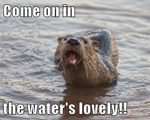 animals pun water otter