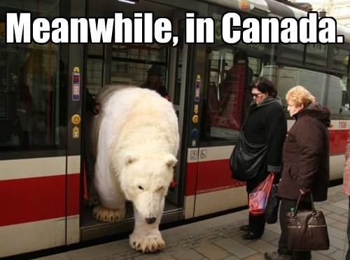 Oh give me a home, where the polar bears take the streetcar to Younge and Charles!