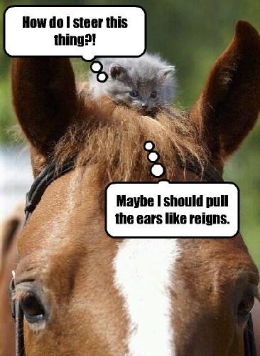 kitten,horse