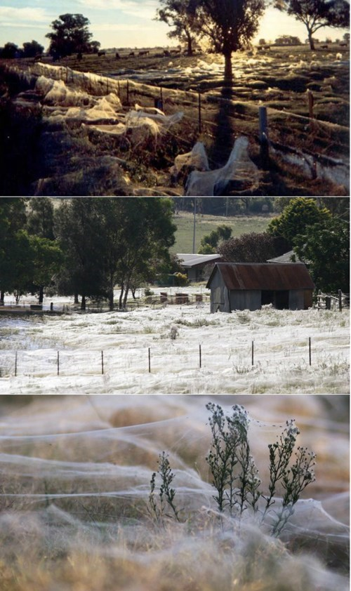 funny-news-fail-australia-spider-rain