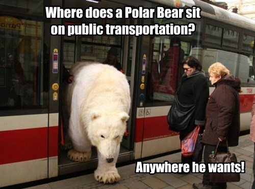 polar bear,mass transit,bear