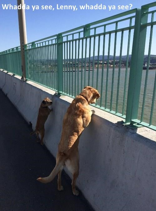 animals dogs view water