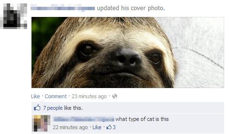 funny-facebook-fail-sloth-cat